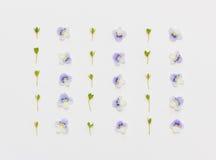 Floral σχέδιο με τα μπλε πέταλα λουλουδιών και τα πράσινα φύλλα σε ένα άσπρο υπόβαθρο Στοκ Εικόνες