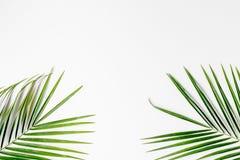 Floral σχέδιο με τα πράσινα φύλλα στο άσπρο πρότυπο άποψης υποβάθρου τοπ Στοκ φωτογραφίες με δικαίωμα ελεύθερης χρήσης