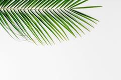 Floral σχέδιο με τα πράσινα φύλλα στο άσπρο πρότυπο άποψης υποβάθρου τοπ Στοκ Εικόνα