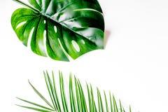 Floral σχέδιο με τα πράσινα φύλλα στο άσπρο πρότυπο άποψης υποβάθρου τοπ Στοκ Φωτογραφία