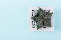 Floral σχέδιο hipster πέρα από το αγροτικό εκλεκτής ποιότητας ξύλινο υπόβαθρο SU Στοκ Εικόνες