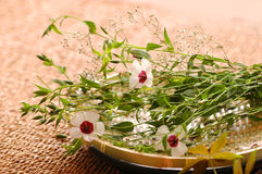Floral σύνθεση SPA στοκ εικόνες με δικαίωμα ελεύθερης χρήσης