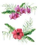 Floral σύνθεση Watercolor με τα εξωτικά λουλούδια και τα φύλλα Χρωματισμένη χέρι ανθοδέσμη με hibiscus και τη ορχιδέα, φύλλα παλα απεικόνιση αποθεμάτων