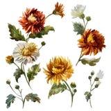 Floral σύνθεση Watercolor απεικόνιση αποθεμάτων