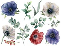 Floral σύνολο ευκαλύπτων και anemone Watercolor Το χέρι χρωμάτισε το μπλε, κόκκινο και άσπρο anemone, μούρο, φύλλα ευκαλύπτων και διανυσματική απεικόνιση