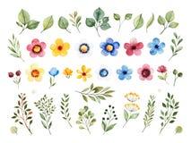 Ζωηρόχρωμη floral συλλογή με τα πολύχρωμα λουλούδια, φύλλα, κλάδοι, μούρα ελεύθερη απεικόνιση δικαιώματος
