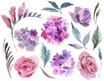 Floral σύνολο Watercolor ρόδινων τριαντάφυλλων, hydrangea, φύλλων και οφθαλμών ελεύθερη απεικόνιση δικαιώματος