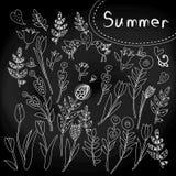 Floral σύνολο στον πίνακα κιμωλίας Στοκ εικόνα με δικαίωμα ελεύθερης χρήσης