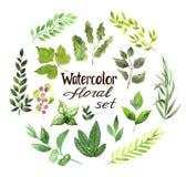 Floral σύνολο watercolor Στοκ Φωτογραφίες