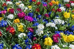 floral σύσταση Στοκ εικόνα με δικαίωμα ελεύθερης χρήσης