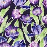 Floral τουλίπα Watercolor Άνευ ραφής ζωηρόχρωμος Στοκ Φωτογραφίες