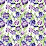 Floral τουλίπα Watercolor backgraund Άνευ ραφής ζωηρόχρωμο σχέδιο άνοιξη Ιώδεις εγκαταστάσεις τουλιπών Watercolour Πορφυρό άνθος Στοκ φωτογραφία με δικαίωμα ελεύθερης χρήσης