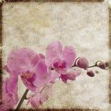 floral τρύγος ανασκόπησης Στοκ φωτογραφίες με δικαίωμα ελεύθερης χρήσης