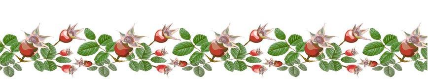 Floral τσάι εμβλημάτων Dogrose horisontal διανυσματική απεικόνιση