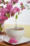 Floral τσάι Στοκ Φωτογραφία