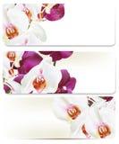 Floral υπόβαθρα που τίθενται με τις ορχιδέες Στοκ Εικόνες