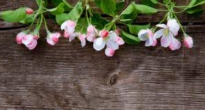 Floral υπόβαθρο άνοιξη με τα λουλούδια της Apple Στοκ Φωτογραφίες