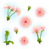 Floral υπόβαθρο άνοιξη με το ρόδινο άνθος sakura Στοκ φωτογραφία με δικαίωμα ελεύθερης χρήσης