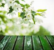 Floral υπόβαθρο ανοίξεων με τα λουλούδια, πράσινα φύλλα Στοκ Φωτογραφίες