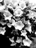 Floral υπόβαθρο από γραπτό Στοκ Φωτογραφίες
