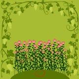 Floral υπόβαθρο για την ημέρα βαλεντίνων Διακοσμητικές διακοσμητικές σταφύλι και ευχετήρια κάρτα τριαντάφυλλων Στοκ Φωτογραφία
