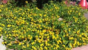 Floral υπόβαθρο λουλουδιών Garden Στοκ φωτογραφία με δικαίωμα ελεύθερης χρήσης
