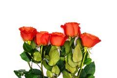 Floral υπόβαθρο με μια ανθοδέσμη των κόκκινων τριαντάφυλλων Ζωηρόχρωμη ανθοδέσμη των τριαντάφυλλων σε ένα άσπρο υπόβαθρο Τα λουλο στοκ εικόνες