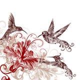Floral υπόβαθρο με τα κολίβρια και hibiscus τα λουλούδια Στοκ Φωτογραφίες