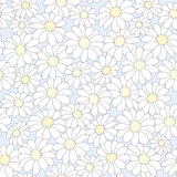 Floral υπόβαθρο με τα camomiles Στοκ Εικόνα