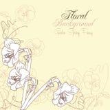 Floral υπόβαθρο με τα pansies και τα amarillis Στοκ εικόνες με δικαίωμα ελεύθερης χρήσης