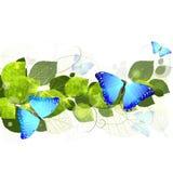 Floral υπόβαθρο με τις πεταλούδες Στοκ Εικόνες