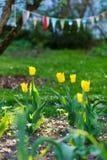 Floral υπόβαθρο λουλουδιών Garden Στοκ εικόνες με δικαίωμα ελεύθερης χρήσης