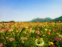 Floral υπόβαθρο λουλουδιών Garden στοκ φωτογραφία