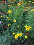 Floral υπόβαθρο λουλουδιών Garden Στοκ εικόνα με δικαίωμα ελεύθερης χρήσης