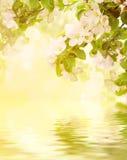 Floral υπόβαθρο της Apple Στοκ Εικόνα