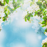 Floral υπόβαθρο της Apple Στοκ φωτογραφία με δικαίωμα ελεύθερης χρήσης