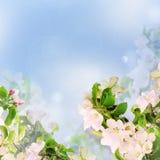 Floral υπόβαθρο της Apple Στοκ Εικόνες
