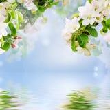 Floral υπόβαθρο της Apple στοκ φωτογραφία