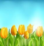 Floral υπόβαθρο φύσης με τα λουλούδια και το μπλε ουρανό τουλιπών Στοκ φωτογραφία με δικαίωμα ελεύθερης χρήσης