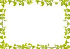 Floral υπόβαθρο χαρτικών συνόρων άσπρο Στοκ φωτογραφία με δικαίωμα ελεύθερης χρήσης