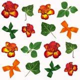 Floral υπόβαθρο χρωμάτων Στοκ φωτογραφία με δικαίωμα ελεύθερης χρήσης