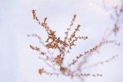 Floral υπόβαθρο Abdtract Στοκ Φωτογραφία