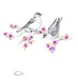 Floral υπόβαθρο watercolor με τα όμορφα λουλούδια Στοκ Φωτογραφίες