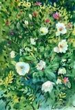 Floral υπόβαθρο Watercolor Στοκ Φωτογραφίες