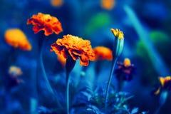 floral φυσικός ανασκόπησης Στοκ Εικόνες
