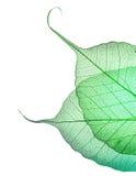 floral φύλλα σχεδίου Στοκ Εικόνα