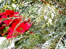 floral χειμώνας στοκ φωτογραφία
