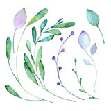 Floral χρώμα στοιχείων με τα watercolors Στοκ φωτογραφία με δικαίωμα ελεύθερης χρήσης