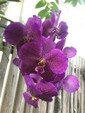 floral images libres de droits