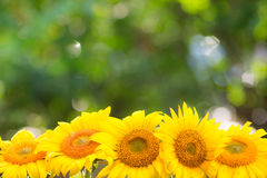 Floral σύνορα Στοκ φωτογραφία με δικαίωμα ελεύθερης χρήσης